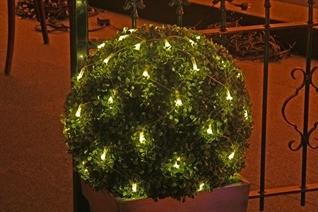 Buxus led lichtnet large